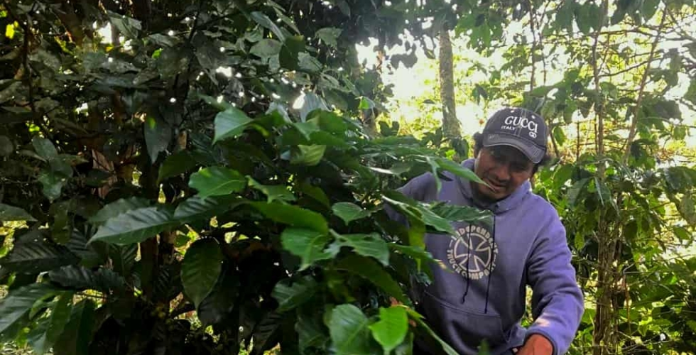 """Coffee and Climate: """"Little Soldiers"""" Fighting the Food Fight"""